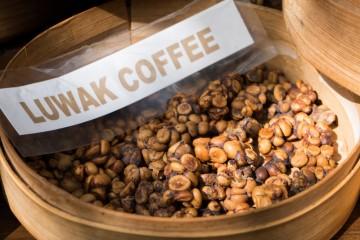 Luwak coffee ako jedna z najlepších káv na svete