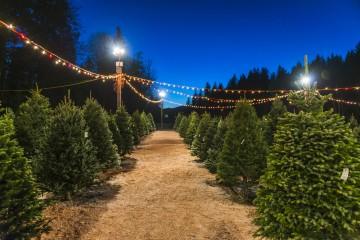 Aký vianočný stromček je šetrnejší pre životné prostredie?