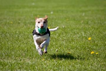 Zvieratá už nebudú vec, poisťovne ich chránia najmä v rámci poistenia domácnosti