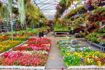 Na holandskej burze kvetov vyhadzujú kvety