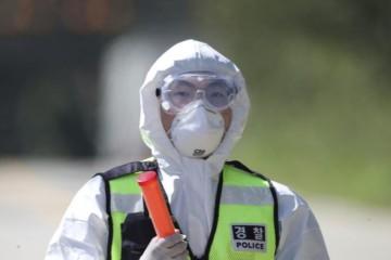 Južná Kórea ohlásila druhý prípad prasacej chrípky, plánujú usmrtiť tisíce ošípaných
