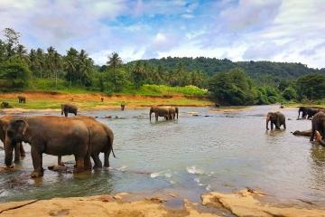Srí Lanka – krajina, ktorá vás vylieči!